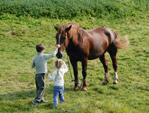 Kids and horses Stock Photos