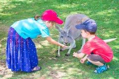Kids with Kangoroo Royalty Free Stock Photography