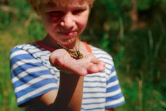 Kids learning insects - little boy holding dragonfly stock image