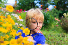 Kids learning - little boy exploring flowers with magnifying glass stock photos