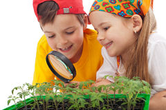 Kids learning to grow food stock images