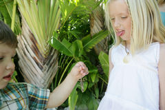 Kids and a lizard. Young boy holding a lizard while a young girl looks on with her tongue out Royalty Free Stock Photo