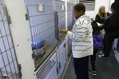 Kids look for new companion. Kids inside Sean Casey Animal Rescue van introduce themselves to prospective new companions during Borough Hall Adoption event in Royalty Free Stock Photography