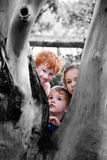 Kids looking around tree in nature garden Royalty Free Stock Images