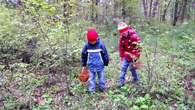 Kids are looking for mushrooms in the forest stock video
