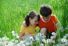 Kids in meadow Royalty Free Stock Image