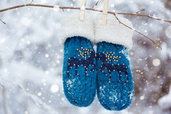 Kids mittens and gloves hanging on a branch in winter forest Stock Photography