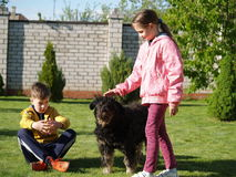 Kids petting a dog. Children stroking a big black dog Stock Image