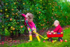 Kids picking apple on a farm Stock Photos