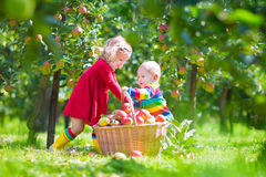 Kids picking apples in a garden Stock Image