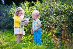 Kids picking blueberry Royalty Free Stock Photo