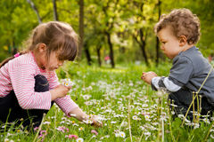 Kids picking daisies park Stock Photo