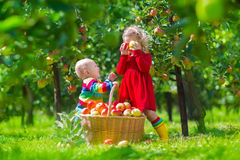 Kids picking fresh apple on a farm Stock Photo