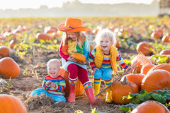 Kids picking pumpkins on Halloween pumpkin patch. Little girl, boy and baby picking pumpkins on Halloween pumpkin patch. Children playing in field of squash Royalty Free Stock Photos