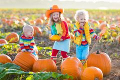 Kids picking pumpkins on Halloween pumpkin patch. Little girl, boy and baby picking pumpkins on Halloween pumpkin patch. Children playing in field of squash Royalty Free Stock Images