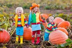 Kids Picking Pumpkins On Halloween Pumpkin Patch Royalty Free Stock Photos