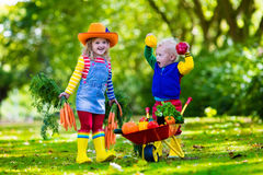 Kids picking vegetables on organic farm Royalty Free Stock Photo