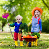 Kids picking vegetables on organic farm. Two children picking fresh vegetables on organic bio farm. Kids gardening and farming. Autumn harvest fun for family Stock Photo