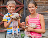 Kids with piglet Royalty Free Stock Photos