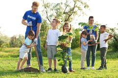 Kids planting trees with volunteers royalty free stock photography