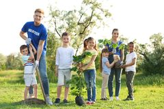 Kids planting trees with volunteers stock photos