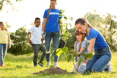 Kids planting trees with volunteers royalty free stock photo