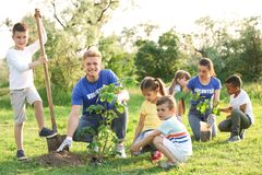 Kids planting trees with volunteers. In park royalty free stock images