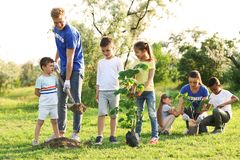 Kids planting trees with volunteers. In park stock photography