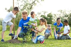 Kids planting trees with volunteers. In park stock photo