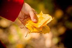 Kids play in autumn park. Fall foliage.autumn mood. Toddler kid or preschooler child in fall.Autumn leaves in girl hands stock images