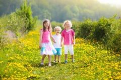 Kids play. Child in dandelion field. Summer flower Royalty Free Stock Photos