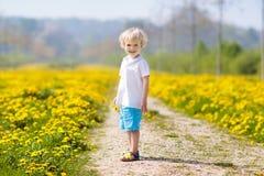 Kids play. Child in dandelion field. Summer flower Stock Images