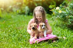 Kids play with puppy. Children and dog in garden. Kids play with cute little puppy. Children and baby dogs playing in sunny summer garden. Little girl holding stock photos