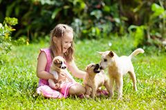 Kids play with puppy. Children and dog in garden royalty free stock image