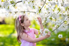 Kids play in spring park. Little girl with flowers. Kids play in spring park. Little girl in sunny garden with blooming cherry and apple trees. Child playing royalty free stock photography
