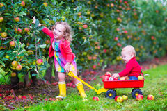 Kids playing in an apple garden. Happy little children, cute toddler girl and adorable funny baby boy, brother and sister, playing together in a beautiful fruit Royalty Free Stock Photos