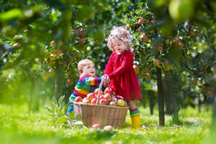 Kids playing in apple tree garden Stock Photo