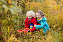 Kids playing in autumn forest royalty free stock image