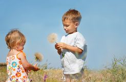 Kids playing with big dandelions Stock Photos