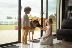 Kids playing with big german shepherd dog coming inside house. Children caressing watch dog protecting home, kids playing with big pet coming inside house stock photos