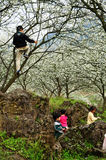 Kids playing in Blooming orchard Spring Royalty Free Stock Photos