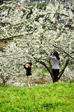 Kids playing in Blooming orchard Spring Stock Photo