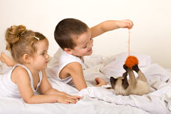 Kids playing with a kitten and a yarn ball royalty free stock photo