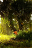 Kids playing in the morning. With ray pg light Royalty Free Stock Image