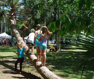 Kids playing on palm tree Stock Photos