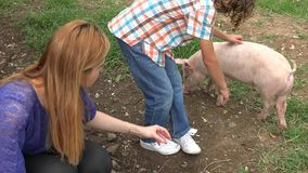 Kids Playing With Pig stock video