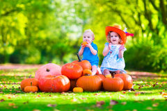 Kids playing at pumpkin patch Stock Image
