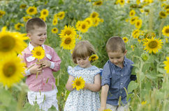Kids playing in a sunflower field Royalty Free Stock Photo