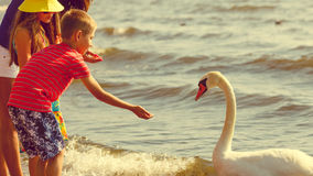 Kids playing with swan white bird. Stock Photo