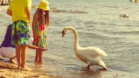 Kids playing with swan white bird. Stock Photos
